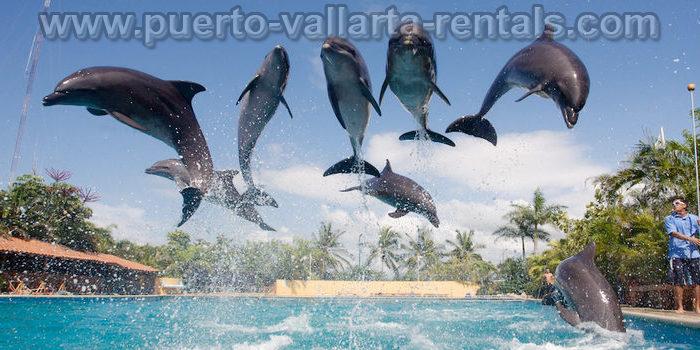 Tours in Puerto Vallarta 12