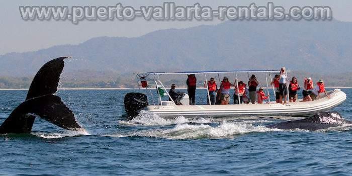 Tours in Puerto Vallarta 4