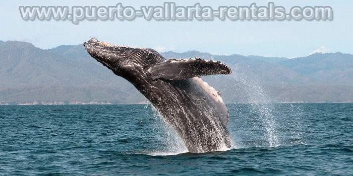 Tours in Puerto Vallarta 8