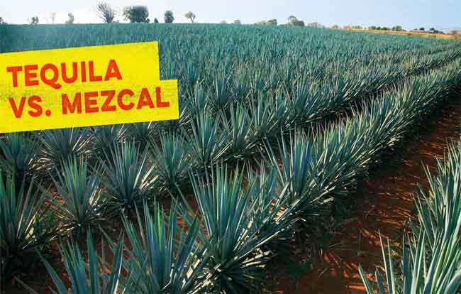 Tequila vs. Mezcal 6
